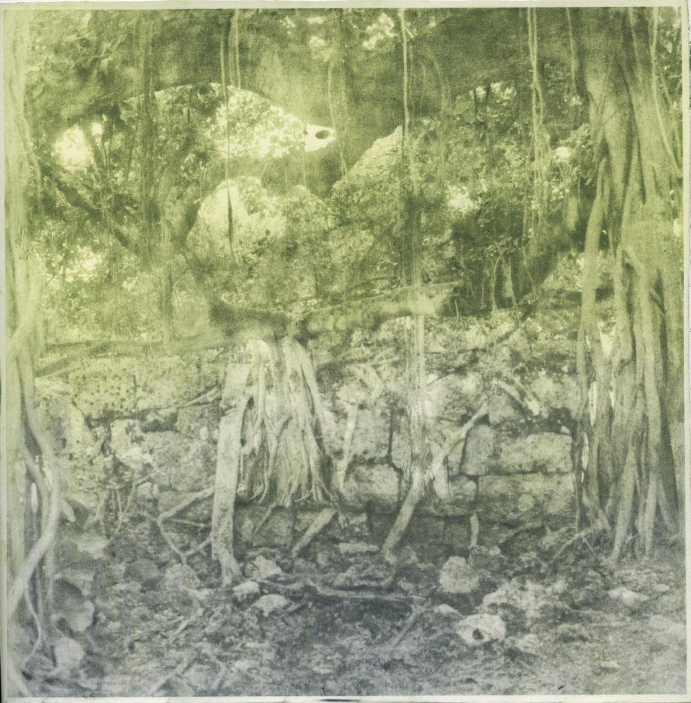 trees-blended
